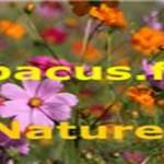 online radio Abacus FM Nature,