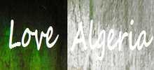 Love Algeria live